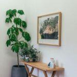 Wel of geen palmboom in je huis?